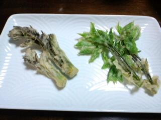タラの芽&コシアブラの天ぷら